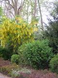 Rendez Vous aux Jardins 2018 -Visite libre du jardin botanique