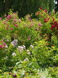 Rendez Vous aux Jardins 2018 -JARDIN BUCOLIQUE DE LA FONTAINE BLINEAU