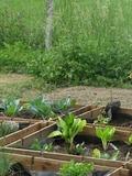 Rendez Vous aux Jardins 2018 -Jardin d'ici et d'ailleurs