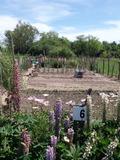 Rendez Vous aux Jardins 2018 -Jardin en partage : ouverture du jardin en partage du quartier Est