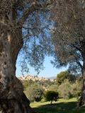 Journées du patrimoine 2016 -Jardin et Musée Renoir