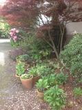 Rendez Vous aux Jardins 2018 -Visite libre du jardin fleuri toute l'année