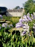 Rendez Vous aux Jardins 2018 -Stand du jardinier - jardins de l'Abbaye de Daoulas