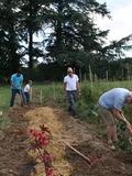 Rendez Vous aux Jardins 2018 -Visite commentée par les bénévoles du jardin partagé.