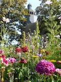 Rendez Vous aux Jardins 2018 -Venez découvrir ou redécouvrir les Jardins thématiques !