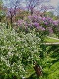 Rendez Vous aux Jardins 2018 -Jeu dans le jardin de Marcel Sembat