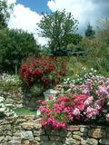Rendez Vous aux Jardins 2018 -L'abbaye en roses