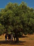 Journées du patrimoine 2016 -L'arbre de la citoyenneté