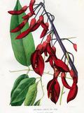 Journées du patrimoine 2016 -L'illustration botanique du XVIe au XXIe siècle à travers les collections de la médiathèque d'Hyères