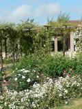 Journées du patrimoine 2016 -Visite libre ou commentée de la roseraie