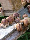 Rendez Vous aux Jardins 2018 -La vie des escargots