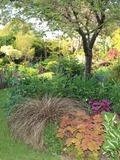 Rendez Vous aux Jardins 2018 -Visite commentée du jardin paysager à l'anglaise