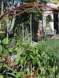 Rendez Vous aux Jardins 2018 -Visite pédagogique d'un petit jardin-forêt en permaculture pour apprécier les 300 variétés de comestibles et médicinales.
