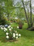 Rendez Vous aux Jardins 2018 -Visite libre du jardin de danyland et sa roseraie