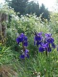 Rendez Vous aux Jardins 2018 -une « sauvagerie maitrisée », le jardin de Pontborn