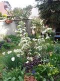 Rendez Vous aux Jardins 2018 -Visite du jardin de Véronique