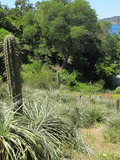 Journées du patrimoine 2016 -Le Jardin des Méditerranées, une invitation au voyage