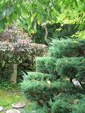 Rendez Vous aux Jardins 2018 -Instant détente au jardin japonais