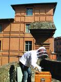 Journées du patrimoine 2016 -Le miel de briques de Montauban