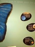 Nuit des musées 2018 -Le nouveau Musée des papillons