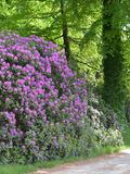 Rendez Vous aux Jardins 2018 -Le rhododendron: plante invasive ou décorative?