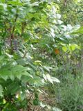 Rendez Vous aux Jardins 2018 -« Le voyage des fruits migrants et vagabonds »