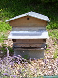 Journées du patrimoine 2016 -Les abeilles, un exemple de citoyenneté
