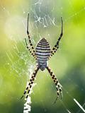Journées du patrimoine 2016 -Les araignées, ces méconnues