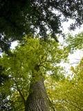 Rendez Vous aux Jardins 2018 -Les Arbres Fabuleux de Cons-la-Grandville - visite découverte du parc du Prieuré.