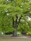 Rendez Vous aux Jardins 2018 -Les arbres remarquables à Valence