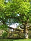 Journées du patrimoine 2016 -Visite guidée de l'arboretum des Grandes-Bruyères : patrimoine 100 % naturel