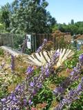 Rendez Vous aux Jardins 2018 -Les insectes du jardin