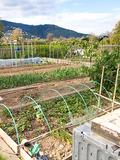 Journées du patrimoine 2016 -Les jardins familiaux de la Basse Vallée de la Siagne
