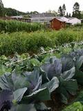Rendez Vous aux Jardins 2018 -Visite guidée des jardins familiaux