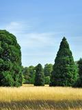 Rendez Vous aux Jardins 2018 -Les Journées de Chèvreloup : visites guidées de l'arboretum