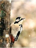 Rendez Vous aux Jardins 2018 -Les oiseaux du Bussy-Rabutin