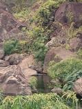 Journées du patrimoine 2016 -Les patrimoines de nos ravines : la ravine Divon