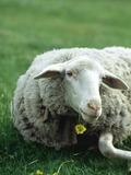Journées du patrimoine 2016 -Les secrets de la laine