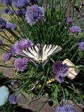 Rendez Vous aux Jardins 2018 -Les trésors cachés de la biodiversité