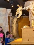 Journées du patrimoine 2016 -Musée de l'ours des cavernes