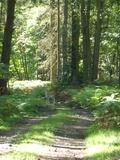 Journées du patrimoine 2016 -Nature et culture au parc de Bruyères-le-Châtel