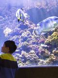 Nuit des musées 2018 -Nocturne de l'Aquarium tropical
