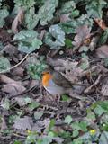 Rendez Vous aux Jardins 2018 -Observation et animations par la Ligue de Protection des Oiseaux