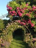 Rendez Vous aux Jardins 2018 -Parc à l'Anglaise et Jardin de roses anciennes de l'Abbaye Saint-Pierre de Bèze