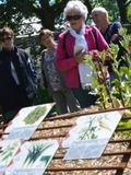 Rendez Vous aux Jardins 2018 -Visite accompagnée