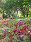 Rendez Vous aux Jardins 2018 -Visite découverte du Parc Floral de la Roseraie
