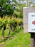 Journées du patrimoine 2016 -Patrimoine végétal unique en France - une parcelle de vigne AOC Saint Mont inscrite aux Monuments Historiques