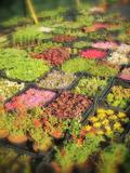 Rendez Vous aux Jardins 2018 -Exposition « Plants de montagne du jardin de l'Arclusaz »