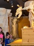 Journées du patrimoine 2016 -Plongez au coeur de la Préhistoire, sur la piste de l'ours des cavernes