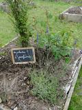 Rendez Vous aux Jardins 2018 -Présentation du site, des aménagements (poubelle, compost...) et des expériences réalisées par les élèves.